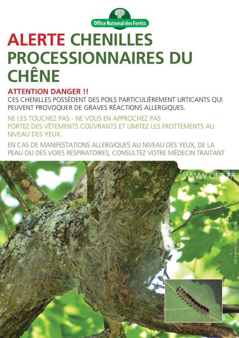 Affiche_Processionnaire.jpg